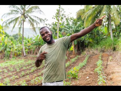 Contributed Photos Romaine Hall stands in his quarter-acre tomato patch, after a rainwater harvesting and drip irrigation system was donated to him by Sean Paul Foundation and Food For The Poor Jamaica.
