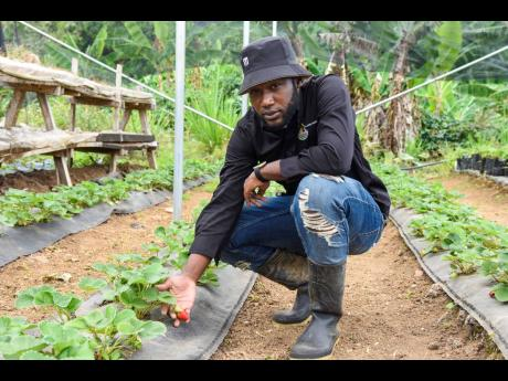 Delano Grant pays keen attention to his fragile plants, ensuring that they are watered daily and sprayed regularly to ward off pests and insects.