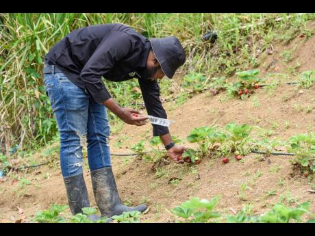 Delano Grant started farming due to the pandemic and a personal desire to create another stream of income.