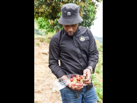 Delano Grant has a 9 -5 job but finds time for his strawberry farm.